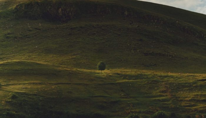 Jamie Hawkesworth, Landscape with Tree
